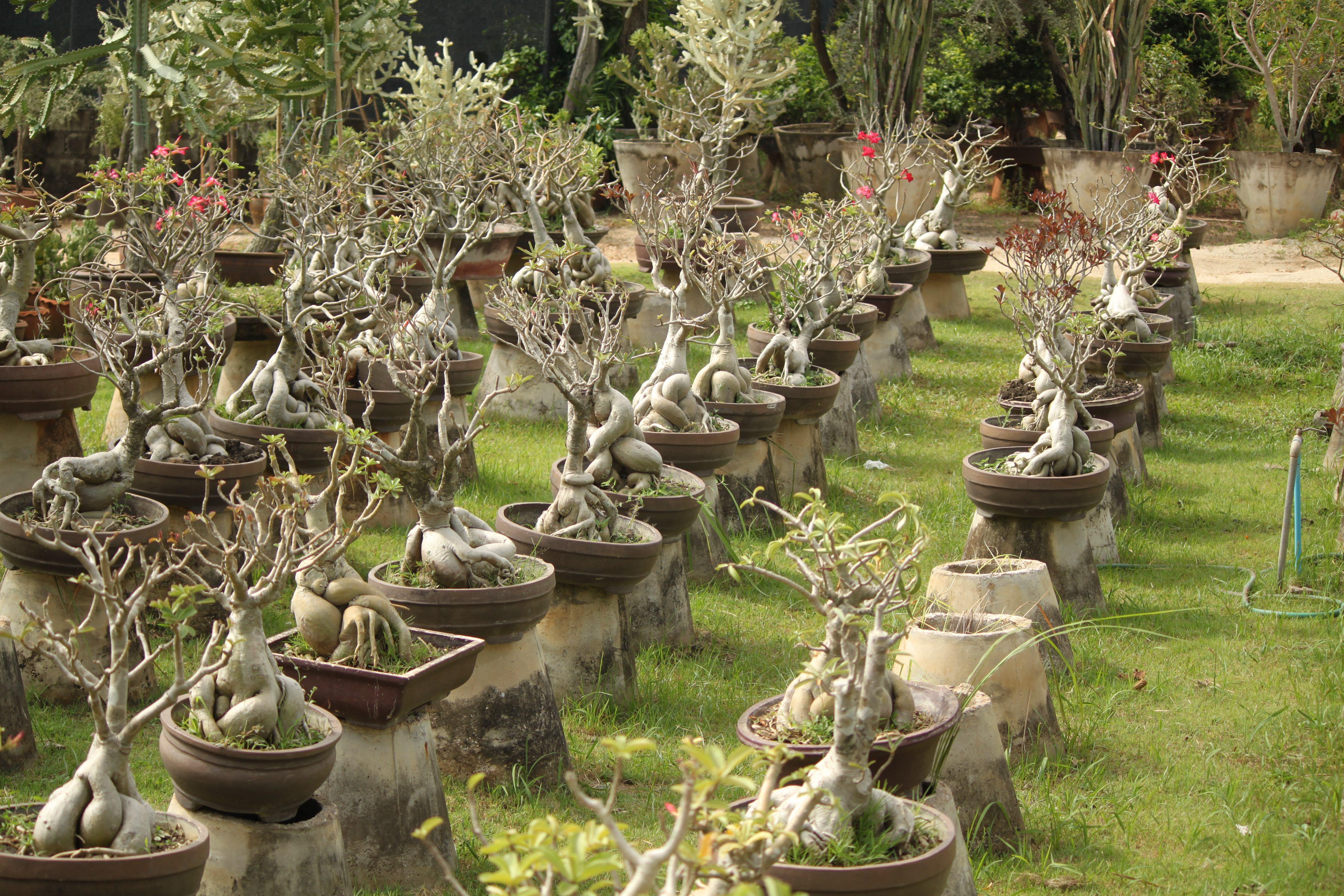 Cosa c e di nuovo expat in thailand imparare a vivere for Alberelli per giardino